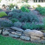 herb bed